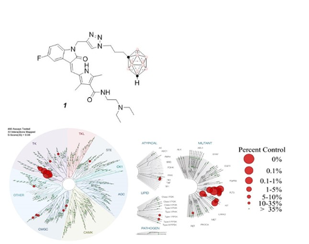 Sunitinib-Containing Carborane Pharmacophore with the Ability to Inhibit Tyrosine Kinases Recep…